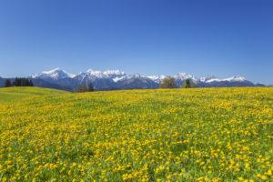 Panorama of the Allgäu Alps near halch, Ostallgäu, Allgäu, Swabia, Bavaria, southern Germany, Germany, Europe