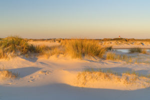 Dunes on the island of Amrum, Norddorf, North Frisian Islands, Schleswig-Holstein, Northern Germany, Germany, Europe