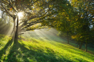 Sun shining through tree, Holzfeld, Boppard, Rhein-Hunsrueck-District, Rhineland-Palatinate, Germany