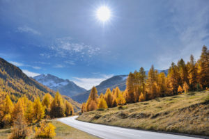 Mountain road with larch trees and sun in autumn, Livigno, Sondrio, Lombardei, Italy