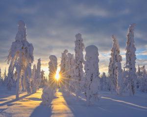 Snow covered landscape in winter, Valtavaara, Patoniemi, Kuusamo, Nordoesterbotten, Pohjois Pohjanmaa, Finland, Suomi