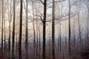 Forest in winter, Weibersbrunn, Spessart, Bavaria, Germany