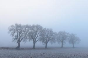 Winter landscape with hoarfrost, Wagenschwend, Odenwald, Baden-Wurttemberg, Germany