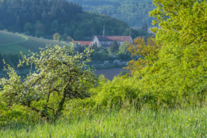 Blooming apple tree with tauber valley and monastery Bronnbach, Reicholzheim, Wertheim, Taubertal, Tauberfranken, Main-Tauber-district, Baden-Württemberg, Germany