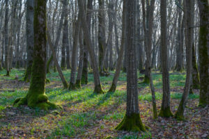 Fairytale forest at sunrise, Sodenberg, Hammelburg, District Bad Kissingen, Rhön, Bavaria, Germany