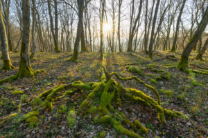 Fairytale forest at sunrise, Sodenberg, Hammelburg, District Bad Kissingen, Rhön, Bavaria, Germany
