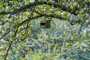 Blooming apple tree with bird house in spring, Reicholzheim, Wertheim, Taubertal, Tauberfranken, Main-Tauber-district, Baden-Württemberg, Germany