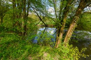 River Saale in spring, Gräfendorf, Gemünden am Main, Fränkische Saale, District Main-Spessart, Bavaria, Germany
