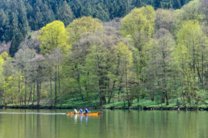 Forest in spring with river neckar and three rowboat, Zwingenberg, River Neckar, Neckar Odenwald District, Baden-Württemberg, Germany