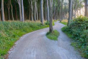 Forked footpath on the coast with sun, Ghost Forest (Gespensterwald), Nienhagen, Baltic Sea, Western Pomerania, Mecklenburg-Vorpommern, Germany