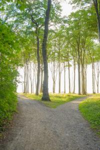 Forked footpath on the coast forest, Ghost Forest (Gespensterwald), Nienhagen, Baltic Sea, Western Pomerania, Mecklenburg-Vorpommern, Germany