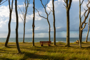 Coastal forest with bench, Ghost Forest (Gespensterwald), Nienhagen, Baltic Sea, Western Pomerania, Mecklenburg-Vorpommern, Germany