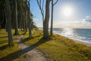 Footpath on the coast with sun, Ghost Forest (Gespensterwald), Nienhagen, Baltic Sea, Western Pomerania, Mecklenburg-Vorpommern, Germany