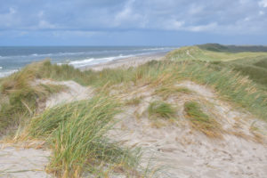 Dune landscape with the north sea in summer, Hvide Sande, Ringkobing Fjord, North Sea, Midtjylland, Central Jutland, Denmark