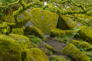 Spooky old oak forest with mossy rocks, Wistman's Wood, Dartmoor, Two Bridges, Princetown, Devon, South West England, England, United Kingdom, Europe