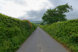 Typical english street lined with hedges, Devon, South West England, England, United Kingdom, Europe