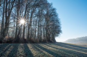 Field landscape with forest on a winter morning
