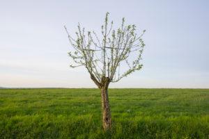 Apfelbaum, Wiese, Frühling, Vielbrunn, Michelstadt, Odenwald, Hessen, Deutschland