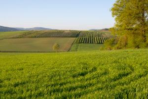 Landscape, grain field, forest, spring, Großheubach, Spessart, Bavaria, Germany