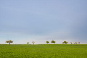 Wiese, Obstbaum, Frühling, Vielbrunn, Michelstadt, Odenwald, Hessen, Deutschland