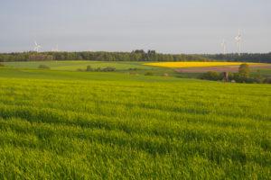 Landscape, grain field, spring, Vielbrunn, Michelstadt, Odenwald, Hesse, Germany
