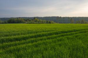 Landschaft, Getreidefeld, Frühling, Vielbrunn, Michelstadt, Odenwald, Hessen, Deutschland