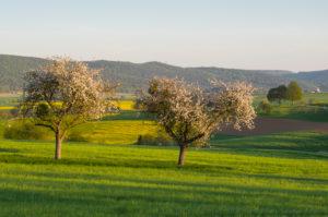 Landscape, apple tree, blossom, spring, Schmachtenberg, Spessart, Bavaria, Germany
