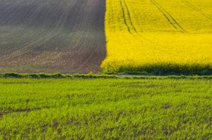 Field landscape, rapeseed field, grain field, spring, Großheubach, Spessart, Bavaria, Germany