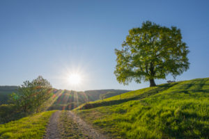 Weg, Eiche, Wiese, Morgen, Sonne, Frühling, Odenwald, Hessen, Deutschland