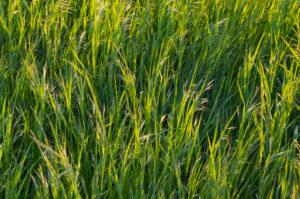 Grass, spring, Schmachtenberg, Spessart, Bavaria, Germany