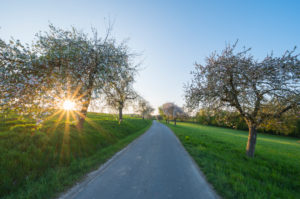 Country road, apple tree, blossom, sunset, spring, Odenwald, Baden-Württemberg, Germany