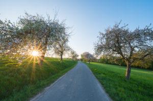 Landstraße, blühende Apfelbäume, Sonnenuntergang, Frühling, Odenwald, Baden-Württemberg, Deutschland