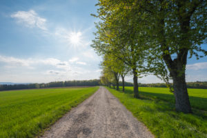 Dirt road, row of trees, sunshine, spring, Neudorf, Amorbach, Odenwald, Bavaria, Germany