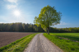 Dirt road, linden tree, field, sunshine, spring, Neudorf, Amorbach, Odenwald, Bavaria, Germany