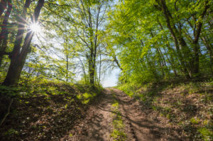 Forest path, sun, spring, Vogelsberg, Hesse, Germany