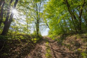 Waldweg, Sonne, Frühling, Vogelsberg, Hessen, Deutschland