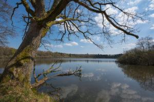 Lake, spring, Rohtenbachteich, Grebenhain, Vogelsberg, Hesse, Germany