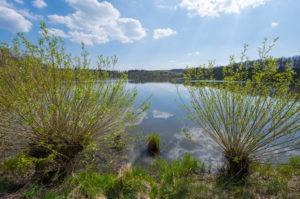 Lake, pastures, spring, Rohtenbachteich, Grebenhain, Vogelsberg, Hesse, Germany