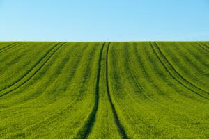 Landscape, field, grain field, hill, spring, Triefenstein, Main-Spessart district, Bavaria, Germany