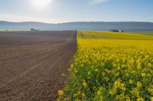 Landscape, rapeseed field, sunrise, spring, Großheubach, Spessart, Bavaria, Germany
