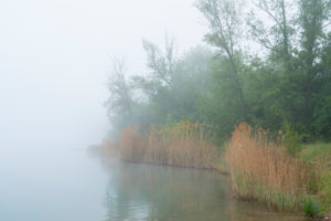 Lake, fog, morning, spring, Niedernberg, Churfranken, Unter Main, Bavaria, Germany