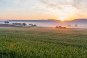 Landscape, grain field, fog, sunrise, spring, Mönchberg, Miltenberg, Spessart, Bavaria, Germany