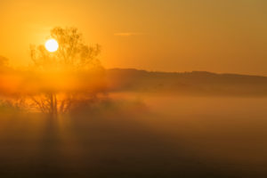 Landscape, meadow, tree, fog, sunrise, spring, landscape protection area, In Russia and in the cow pasture, Limeshain, Wetterau, Hesse, Germany