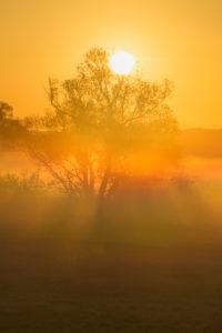 Landschaft, Wiese, Baum, Nebel, Sonnenaufgang, Frühling, Landschaftsschutzgebiet, Im Rußland und in der Kuhweide, Limeshain, Wetterau, Hessen, Deutschland