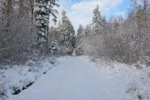 Path, forest, winter, Odenwald, Baden-Württemberg, Germany