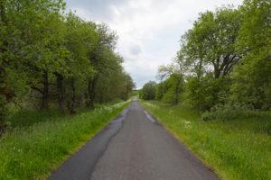 Straße, Wald, Frühling, Lange Rhön, Rhön, Bayern, Deutschland