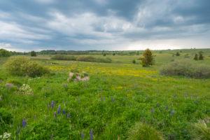 Landscape, meadow, spring, Oberelsbach, Lange Rhön, Rhön, Bavaria, Germany