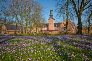 Germany, Schleswig - Holstein, Husum, approx. 5 millions lilac crocuses (Crocus napolitanus) every year, castle grounds, the 'Schloss vor Husum' (castle), known as 'Blütenwunder des Nordens'