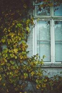Fenster mit geschlossener Jalousie und Weinlaub,