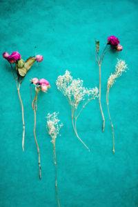 Trockenblumen auf türkiser Fläche,
